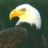 LA_Eagle_Fan