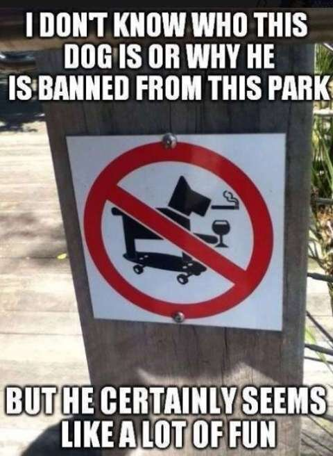 dont-know-who-dog-is-sign-why-banned-from-park-but-seems-like-fun.jpg